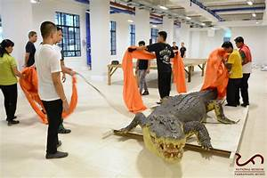 Lolong, once world's largest crocodile in captivity, now ...