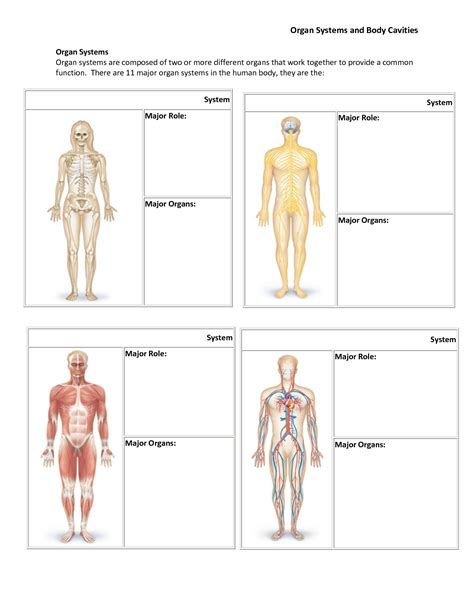 Human Body Organ Systems Worksheet Worksheets For All  Download And Share Worksheets  Free On