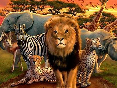 African Animals Wallpapers Dieren Animales Painting Diamond