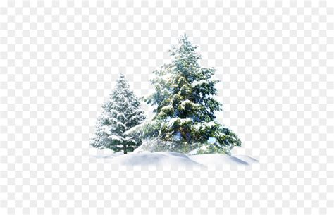 Tree Wallpaper Png by Polar Snow Pine Wallpaper Snow Tree