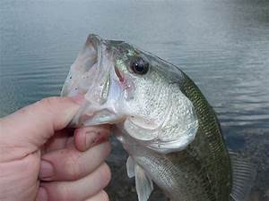 Top Places For Bass Fishing In Maryland