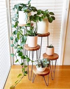 50, Indoor, Plant, Decor, Ideas, To, Elevate, Your, Home
