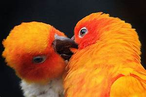 16 Sweet Pictures Of Kissing Birds