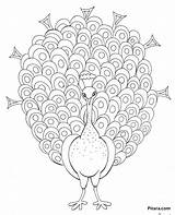 Peacock Coloring Cartoon Pitara Birds Craft Animals Coloringbay Pdf sketch template