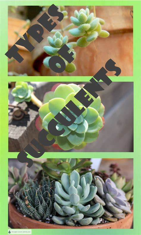 types  succulents chubby spikey textured smooth