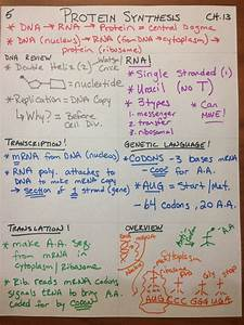 Pap Dna And Protein Synthesis