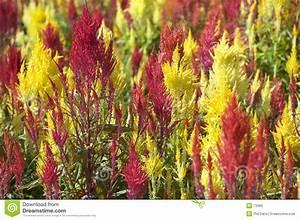 Rotes Gras Winterhart : rotes und gelbes gras lizenzfreie stockbilder bild 73389 ~ Michelbontemps.com Haus und Dekorationen