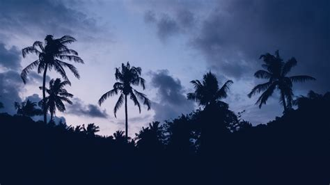 wallpaper  palm trees clouds night background hd image