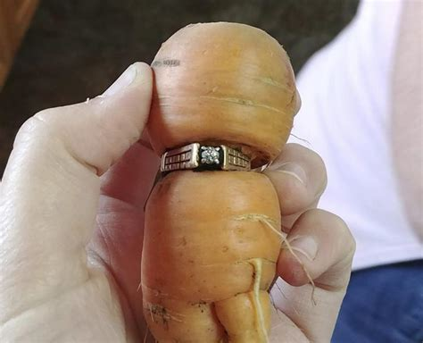 Woman Finds Lost Engagement Ring Wrapped Around A Carrot