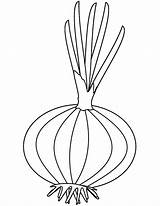 Onion Coloring Pages Printable Colouring Drawing Onions Template Adults Categories sketch template