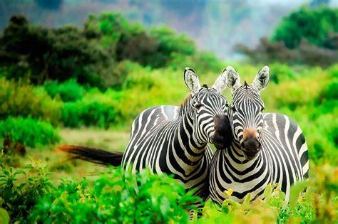 Kenya Safari Tours from India - Chalo Africa