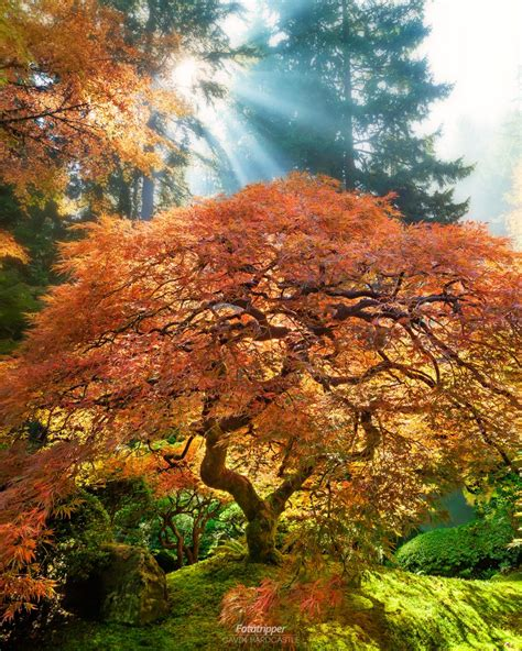 Japanischer Garten Portland by How To Shoot Portland Japanese Garden Fototripper