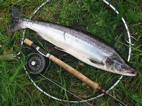 river awe salmon fishing