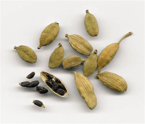 cardamom spice file elettaria cardamomum2 jpg wikimedia commons
