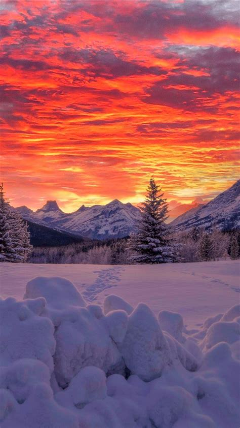 Alberta Canadian Fir Tree And Mountain With Snow During