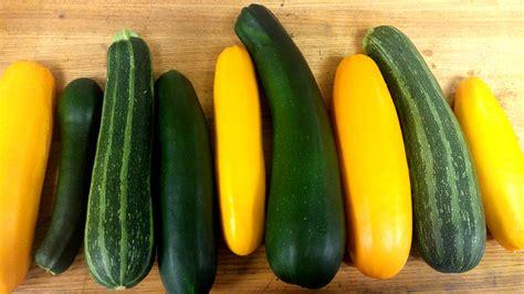 Vertical Gardening Zucchini by How To Grow Squash And Zucchini Vertically Greenstalk