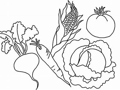 Vegetables Coloring Vegetable Pages Printable Fruit Fruits