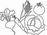 Vegetables Coloring Vegetable Pages Printable Fruits Fruit Drawing Colouring Types Various Print Printables Bestcoloringpagesforkids Flower Sheets Books Worksheets Popular Adult sketch template