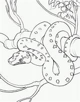 Snake Coloring sketch template