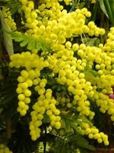 Kamelie Gelbe Blätter : k belpflanzen kaliebes blumenhaus ~ Lizthompson.info Haus und Dekorationen