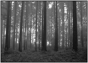 Lowboard Schwarz Weiß : schwarz weiss wald von alberts fotografie galerie ~ Lateststills.com Haus und Dekorationen