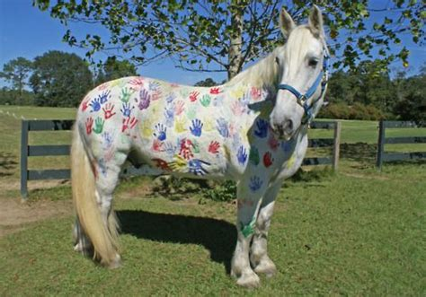 paint  white horses horse camp ideas