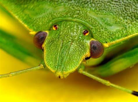 """Be On The Look-out For This Distinct """"bug"""