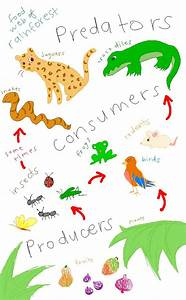 17 Best images about Food Chains & Food Webs ♥ Projects ...