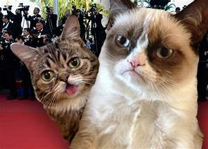 Rise of the Hollywood Cats: Inside Grumpy Cat and Lil BUB ...