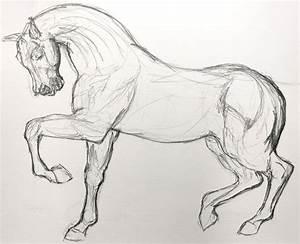 Simple Horse Sketches