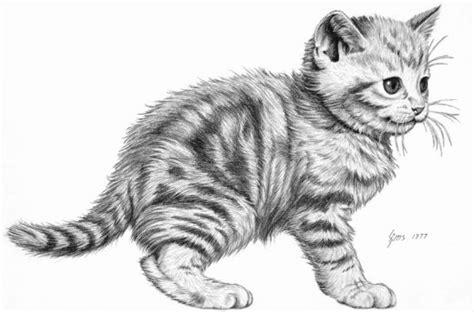 animal drawings  pets   animals