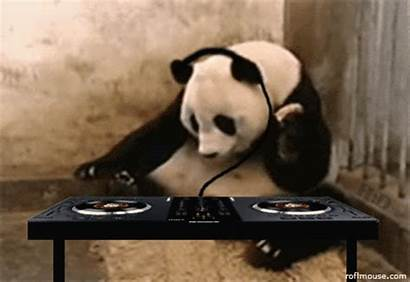Funny Dj Animal Playing Panda Animals Jokes