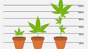 Indoor Grow Anleitung : homegrowing und die justiz je gr er die pflanze desto h her die strafe leben themen puls ~ Eleganceandgraceweddings.com Haus und Dekorationen