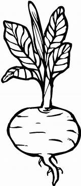 Beets Coloring Pages Print sketch template