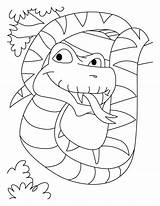Coloring Snake Boa Constrictor Python Pages Jumbo Anaconda Cobra King Printable Clipart Very Credit Azcoloring Library Template Popular Coloringhome Getcolorings sketch template