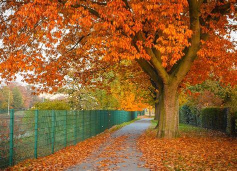 Best Trees To Plant  10 Options For The Backyard  Bob Vila