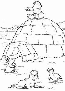 polar animal coloring pages - polar bear coloring sheet page image clipart images
