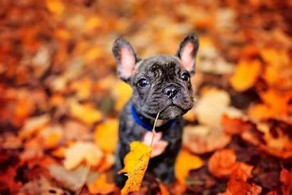 Fall Dog Grooming Happy Pet Healthy Keep