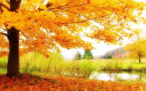 Autumn Wallpapers Hd by Hd Autumn Scenery Wallpaper Hd Wallpapers