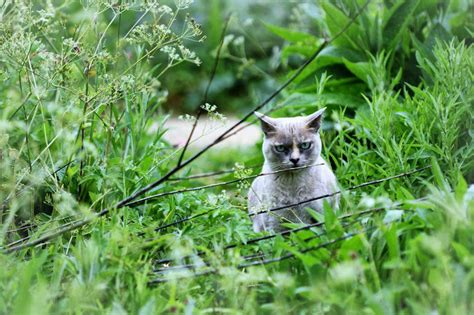 confident wild animals stare   photographer