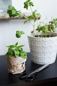 Ahorn Vermehren Steckling : basilikum vermehren tipps kreative fotografie hacks ~ Lizthompson.info Haus und Dekorationen