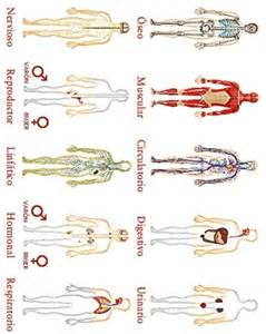 Printable Human Body Parts Worksheet Spanish
