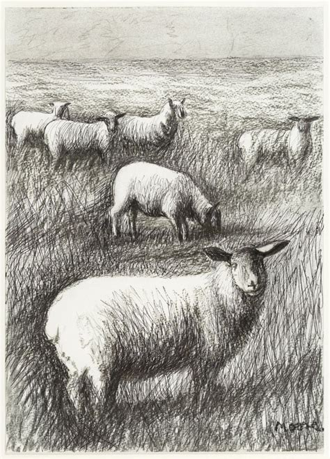 henry moore  sheep   field hmf