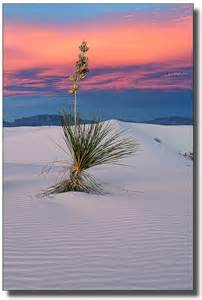 White Sands New Mexico Water