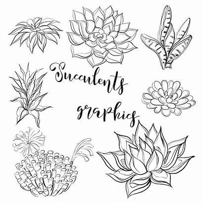 Succulents Coloring Vector Illustration Graphics Succulent Clipart