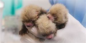 I, for one, welcome our newborn red panda overlords | MNN ...