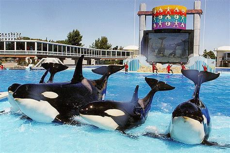 california lawmakers pass bill banning orca shows captive