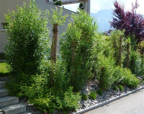 Sichtschutz Terrasse Pflanzen  Nowaday Garden