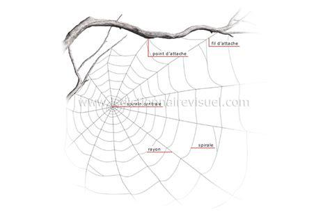 r 232 gne animal gt insectes et arachnides gt araign 233 e gt toile d araign 233 e image dictionnaire visuel