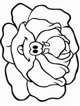 Lettuce Coloring Clipart Clip sketch template